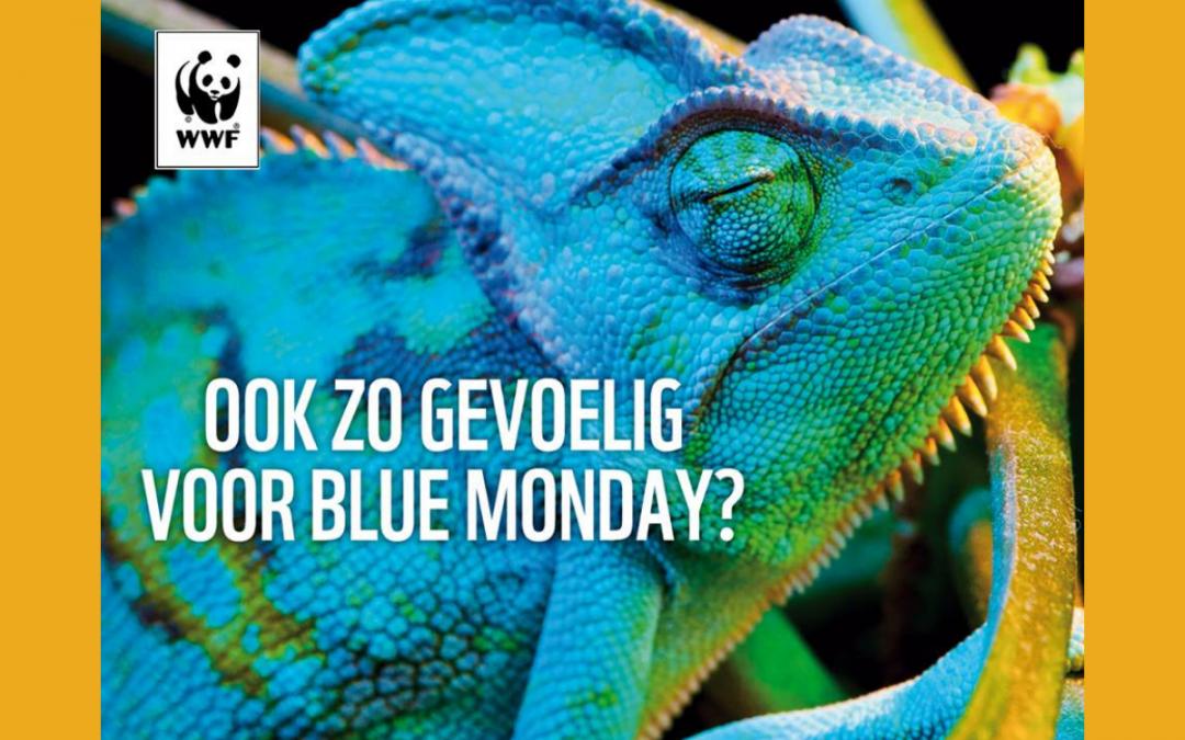 Blue Monday: meer dan een inhaker